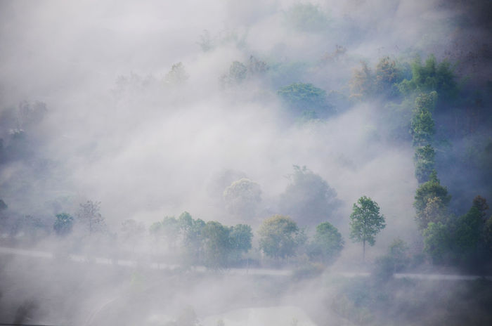 sea of mist on forest ,use for background,use for copy space,chiang khan thailand. Green Road Sea Of ​​clouds Background Backgrounds Beauty In Nature Cold Day Fog Forest Freshness Growth Nature No People Outdoors Pattern Scenics Sea Of Fog Sea Of Mist Sky Tranquil Scene Tranquility Tree