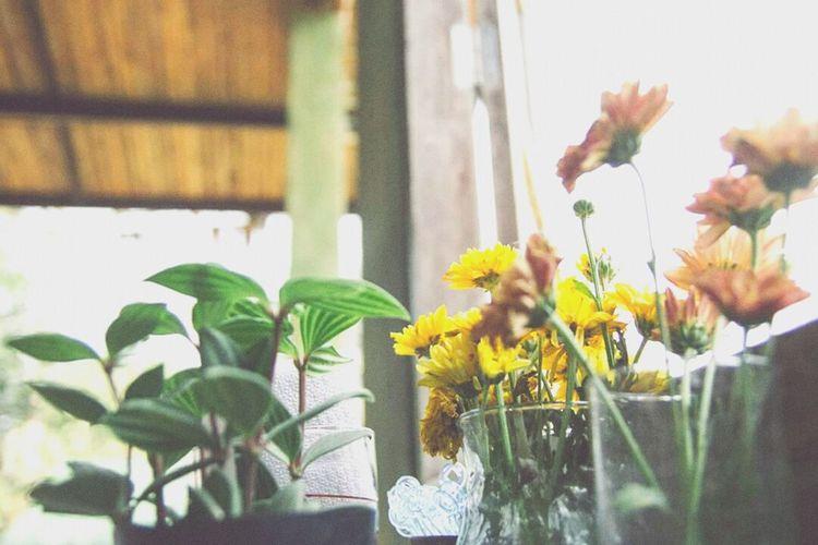 OpenEdit Flower Sangklaburi