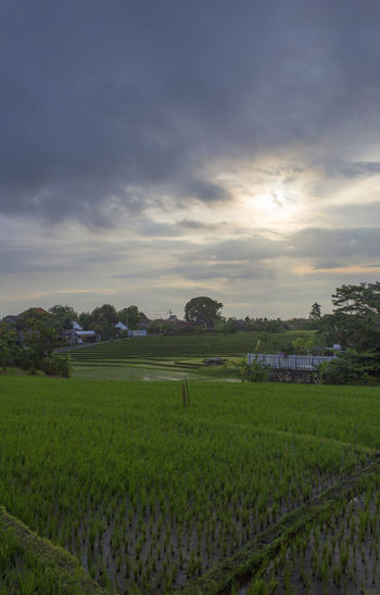 Agriculture Bali Bali, Indonesia Cloud - Sky Field Grass Greenhouse Landscape Nature No People Outdoors Scenics Sky Travel Destinations Tree Vertical