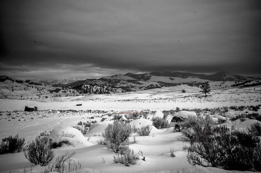 Lamar Valley Landscape Black & White Sky Beauty In Nature Scenics - Nature Snow Winter Environment Tranquil Scene Cold Temperature Tranquility Nature Landscape Cloud - Sky Mountain Tree Non-urban Scene No People Day Plant Mountain Range Outdoors