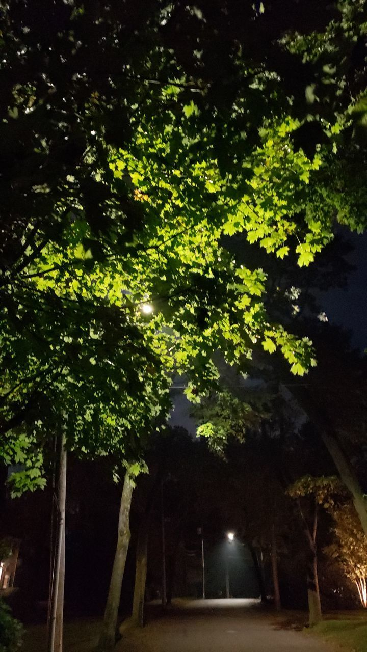 tree, plant, growth, nature, no people, illuminated, night, green color, outdoors, architecture, low angle view, sky, tranquility, beauty in nature, branch, lighting equipment, direction, land, built structure