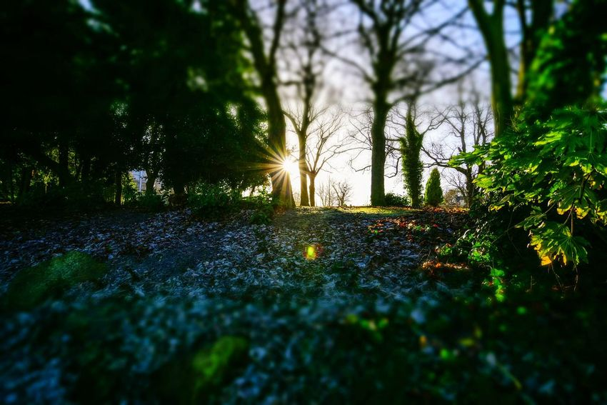 Leazes Park Betterlandscapes Park North East England EyeEm Masterclass Sun Star The Week On EyeEm Nature Tree Tranquility Beauty In Nature Sunlight No People Tranquil Scene Leaf Growth Outdoors Scenics Sun Sunset