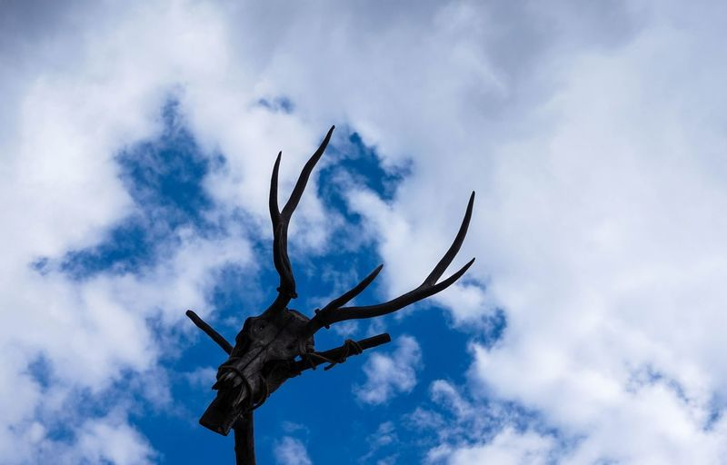 Looking At Camera Old Gods Abstract Animal Animal Themes Animal Wildlife Animals In The Wild Art Cloud - Sky Day Dead Deer Flying Low Angle View Nature No People Outdoors Representation Scarecrow Sculpture Sky Wood - Material