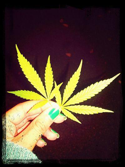EyeEm Natue Lover Art & Marijuana Weed Collection