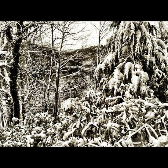 The view right outside me front door :) Boone Mylife Ignation IGDaily picoftheday shotoftheday snow nature beauty halloween boone mylife instagood instamood