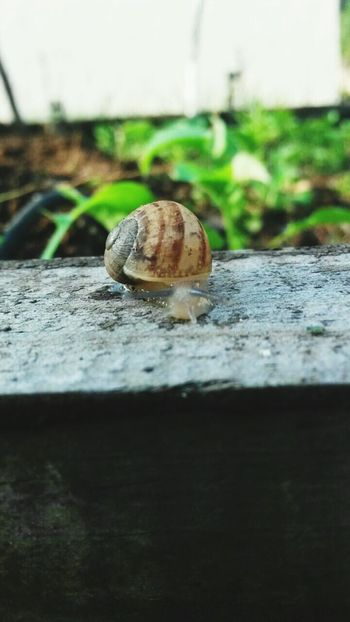 Snail Outside On Wood Greenery In The Background Beauty In Nature Satisfaction