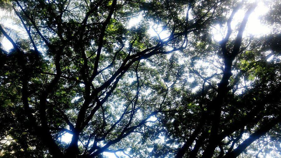 Nature's Blush Good Morning✌♥