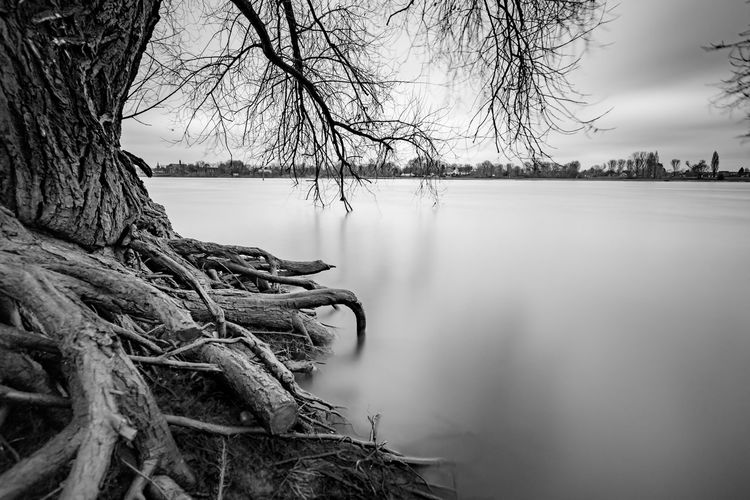 Relaxing Pictures Branches Nature Reflection Rhein Tranquility Tree Beauty In Nature Black And White Blackandwhite Day Long Exposure Nature No People No People, Outdoors River Roots Sky Tranquil Scene Water Shades Of Winter