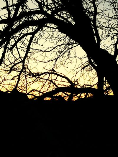 Bird Silhouette Tree Sunset No People Outdoors Nature Sky