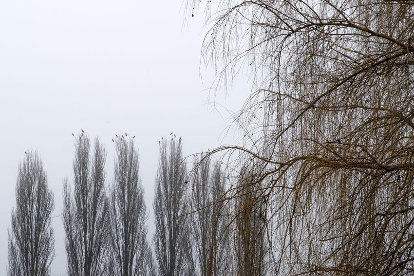 Alberi -Abruzzo-Italia Fog Tree Tranquility Nature No People Beauty In Nature Winter Tranquil Scene Non-urban Scene Scenics - Nature Pioppi Salice Piangente Day Italy Ortucchio Abruzzo