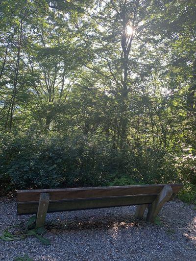 Seat Tree Bench