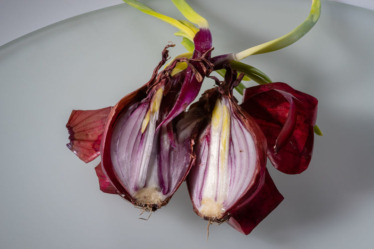 Onion Surgery Close-up Food No People Food And Drink Indoors  Vegetable Still Life Plant Vulnerability  Fragility Onion Red Studio Shot Healthy Eating Purple Cut Directly Above Beauty In Decay