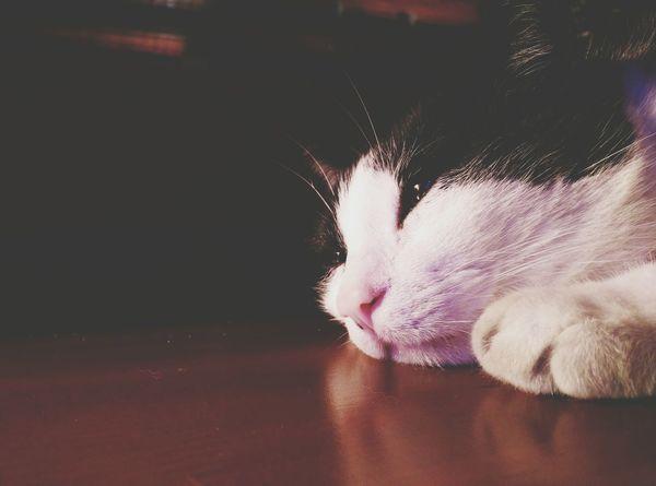 Cat Content Cat Cats Of EyeEm