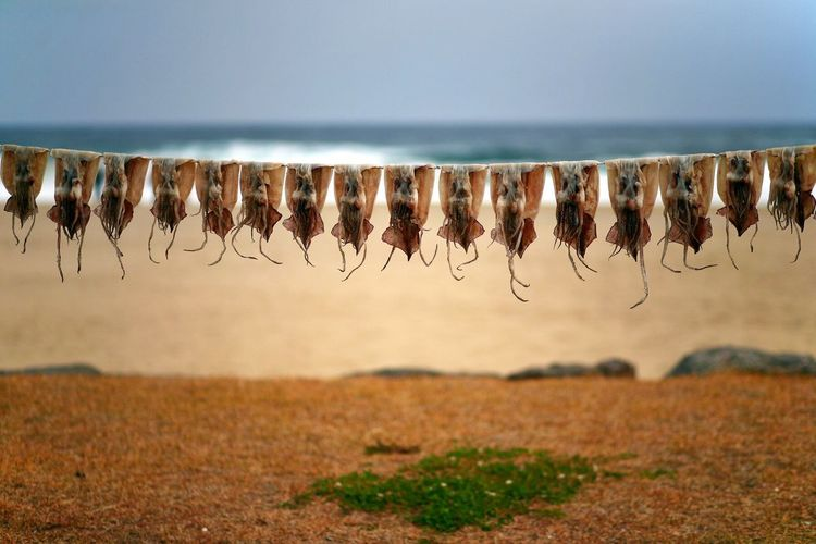 Squids hanging on string at beach against sky