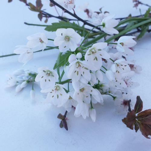Tree Flower Branch Flower Head Springtime Blossom Water Beauty Close-up Sky In Bloom Blooming Stamen
