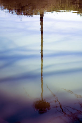 Reflection Of The Dead Sentinel Beauty In Nature Close-up Day Lake Nature No People Outdoors Reflection Sky Tranquility Tree Water
