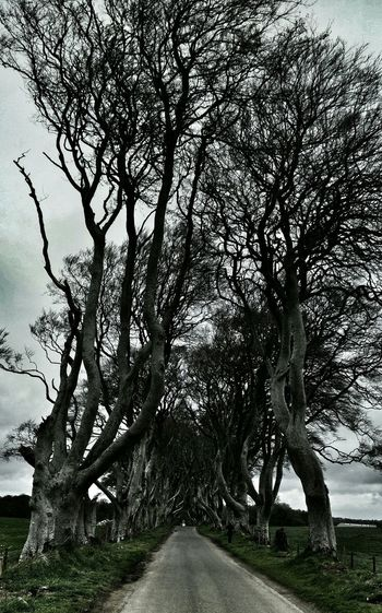 Dark Hedges Gameofthrones
