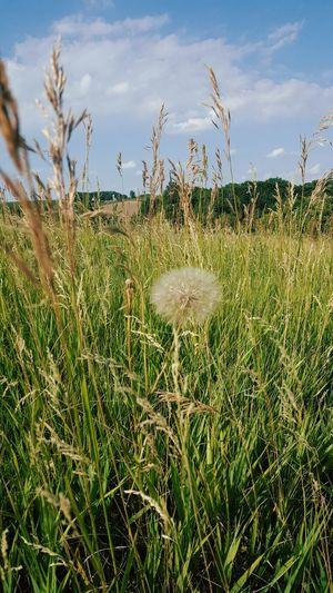 Plants growing on grassy field