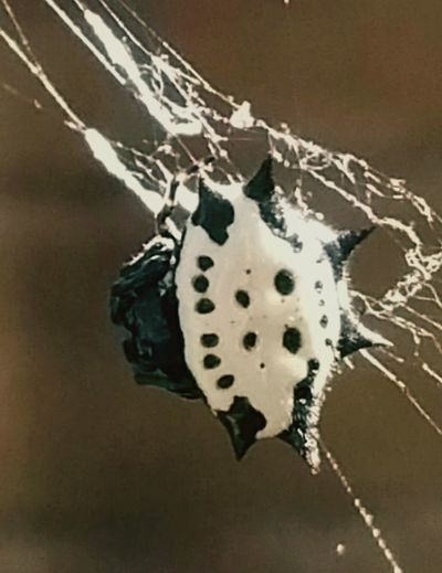 Close-up Textured  Macro Photography Macro Nature Spiny Orb Weaver Weaving Beauty In Nature Popularphotos EyeEm Nature Lover Animal Themes EyeEm Gallery EyeEm Best Shots Web Spider Spider Web