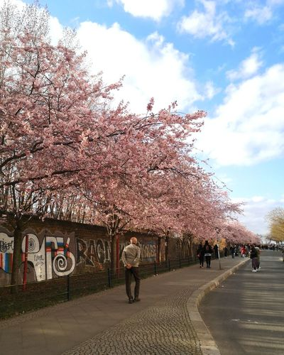 View of cherry blossoms in city