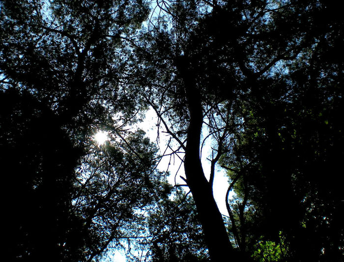 Beauty In Nature Branch Day Forest Growth Low Angle View Nature No People Outdoors Silhouette Sky Sunlight Tranquility Tree Tree Trunk Trunk