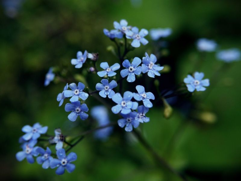 Gellért Hill flowers Beauty In Nature Blooming Blue Blue Color Blue Flowers Close-up Day Flower Flower Head Forget Me Not Fragility Freshness Green Green Color Growth Nature No People Outdoors Petal Plant Springtime