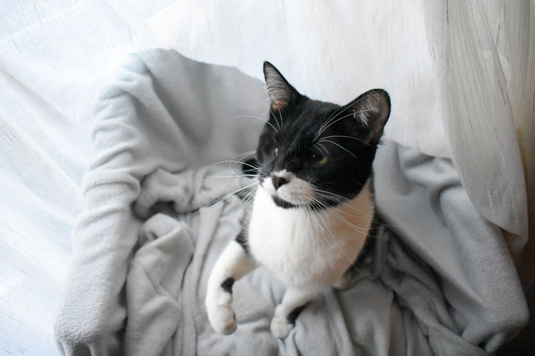 Close-up of a cat on bed