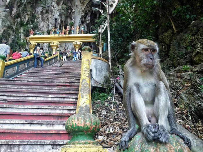 Low angle view of monkey sitting next to temple steps