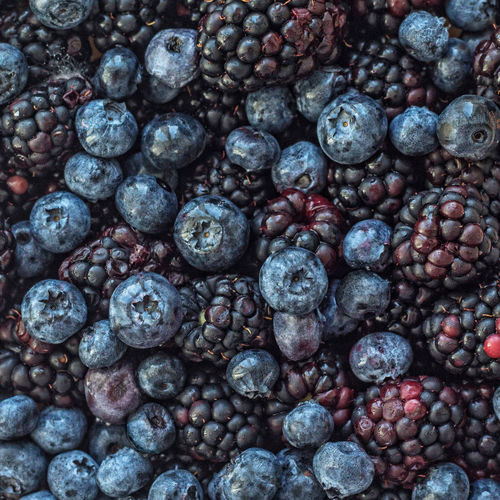 Berry Blackberry Food Freshness Healthy Eating No People