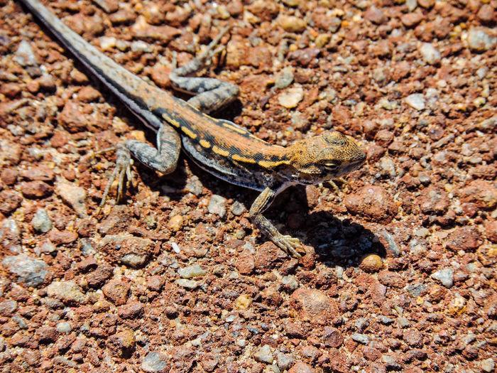 High angle view of lizard on ground