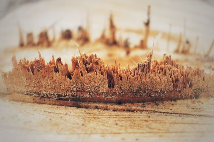 wooden structure Outdoor Photography My Point Of View Wood Grow Naturelovers Nature Abstract Broken Orange Color Warm Warm Colors Eyemphotography Eyem Nature Lovers  Eyemgallery Day No People Nature Outdoors Growth Close-up Freshness