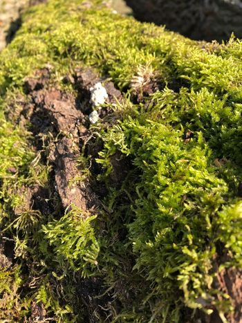 Moss Moss Green Color No People Nature Sunlight Day Growth Outdoors Beauty In Nature Plant
