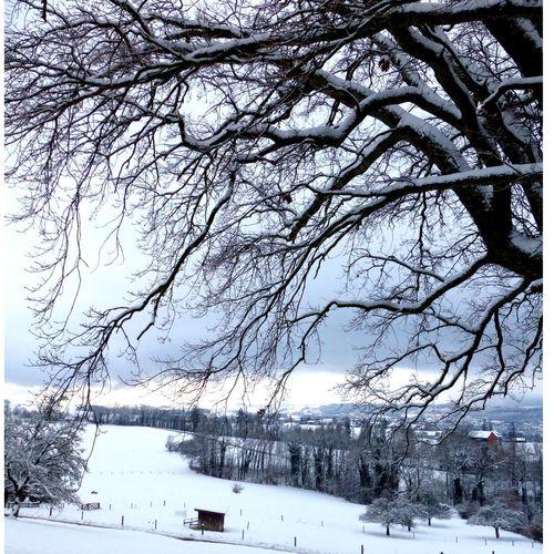 WINTERWONDERLAND Winter Winter Wonderland Switzerland Blüemlisalp Taking Photos