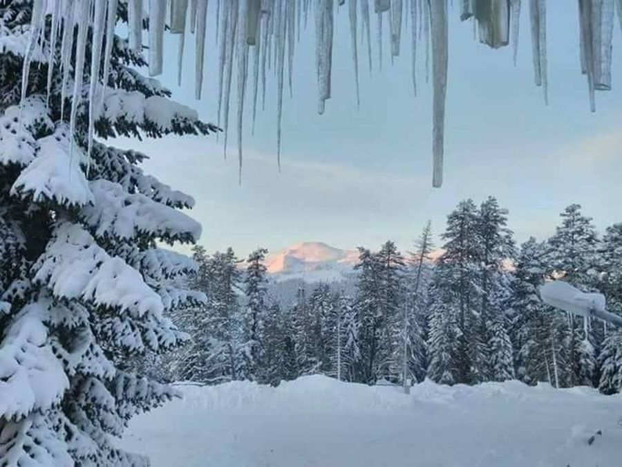 Kastamonu Ilgaz Dağı Tree Forest Pine Tree Pinaceae Winter Snow Pine Woodland Nature Cold Temperature Scenics Tranquility Beauty In Nature Landscape Outdoors No People Mountain Evergreen Tree Tree Area Day
