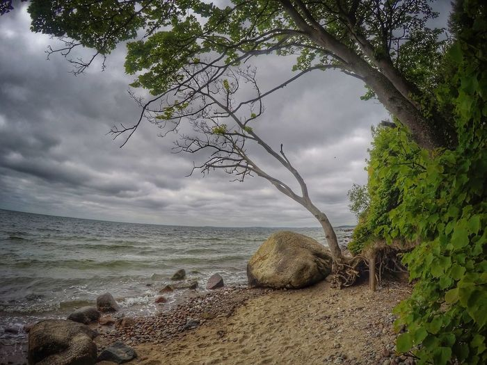 Baltic Sea Balticsea Ocean View Wind Power Beauty In Nature Branch Cloud - Sky Day Horizon Over Water Nature No People Ocean Oecean Scenery Outdoors Scenics Sea Sea And Sky Seascape Seaside Sky Tranquil Scene Tranquility Tree Water Wind