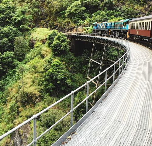 Train Bridge Green Green Color Tree Trees Rainforest Vegitation View Cairns Australia Nature Train Ride The Mix Up On The Way Pivotal Ideas capturing motion Adapted To The City