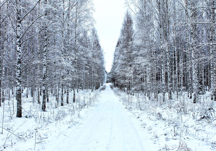 Snow covered land and trees during winter