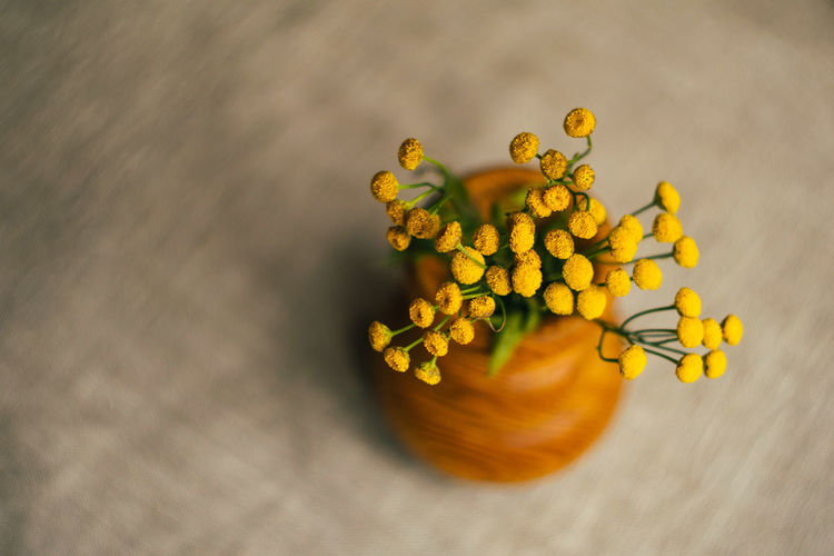 Close-up of yellow flower on table