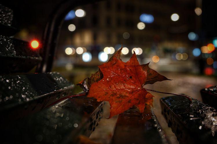 Close-up of wet maple leaves on illuminated street
