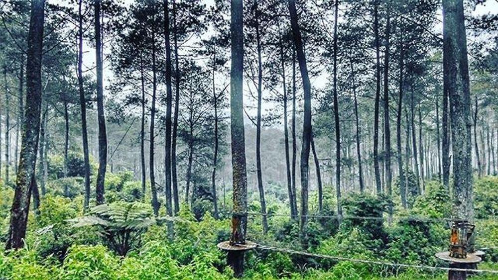 Green up ahead Nature ALaM Cikole Lembang WeekendEscape Tenangdandamaiterasa