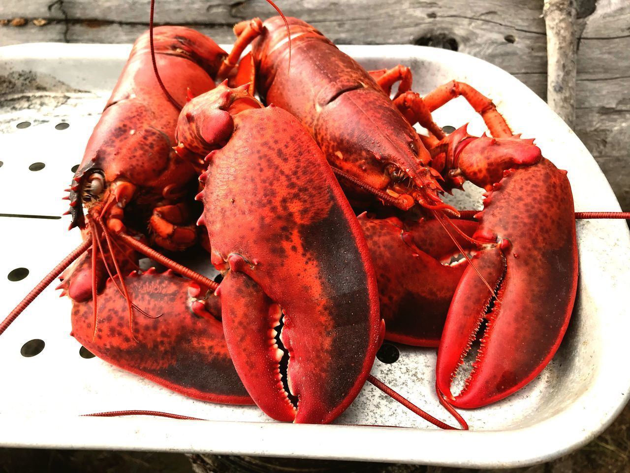 crustacean, seafood, food, food and drink, lobster, freshness, healthy eating, close-up, wellbeing, red, plate, no people, claw, day, still life, raw food, animal, cooked, crab, ready-to-eat, marine, dinner