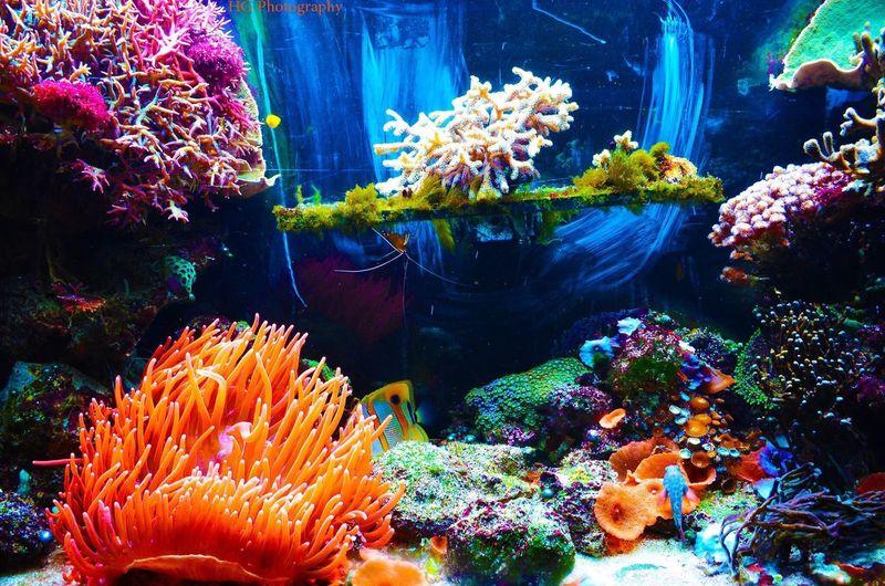 Gazing Exploring The Tremendous Amazing Life Underwater Beautiness Of Creatures First Eyeem Photo Loving It  ❤❤❤