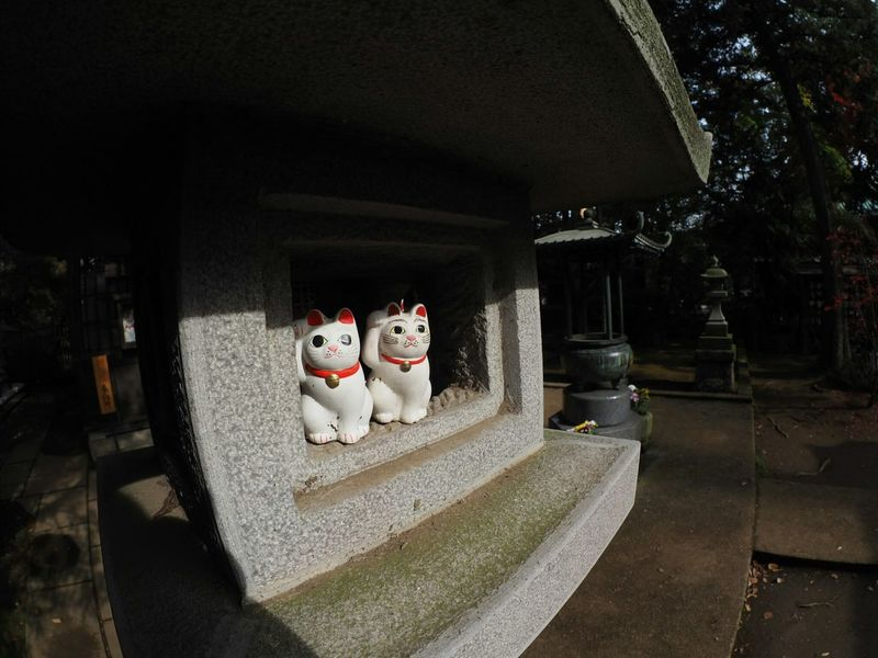 Manekineko Cat Olympus Om-d E-m10 Japanese Temple Japanese Culture Light And Shadow Taking Photos Japan From My Point Of View Gotokuji まねきねこ 招き猫