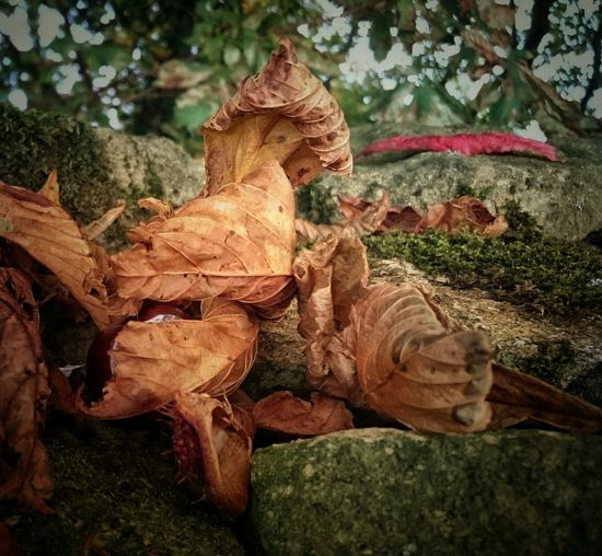 Autumn Autumn Colors Autumn Is Coming EyeEm Best Shots Fragility Beauty In Nature Nature Focus On Foreground Leaves🌿 Leaves Decaying Decayed Beauty Decaying Leaves
