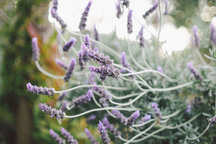 Beauty In Nature Branch Close-up Day Flower Fragility Freshness Growth Nature No People Outdoors Plant Purple Tree