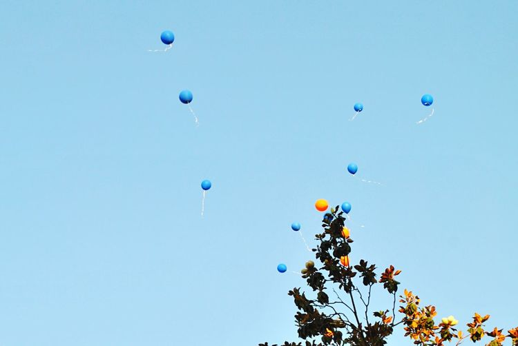 Ten Wishes EyeEm Selects Blue Mid-air Nature Balloon Sky 10 Bubble Celebration Freedom 10 10