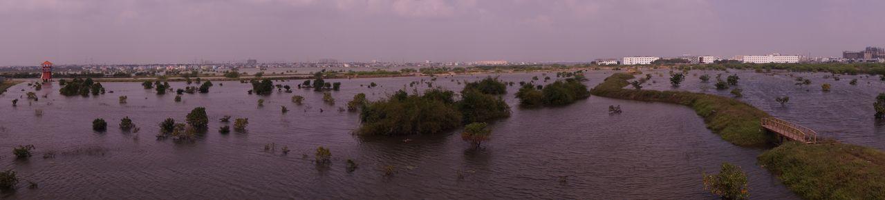 Reclaimed Marshlands in Chennai Afforestation Bird Sanctuary Chennai Chennai Floods Chennai Rain Chennai_chapter Marshland  Panaroma Photography Reclaimed By Nature