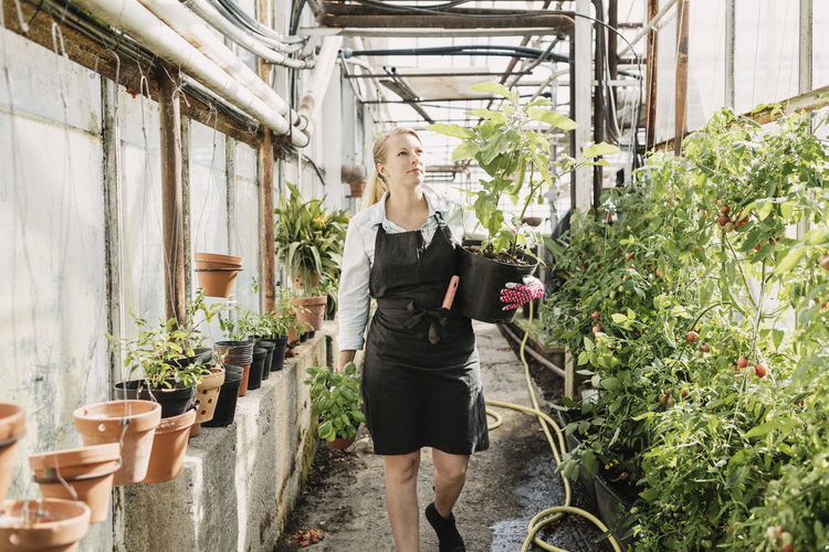 Female gardener carrying potted plants an walking in greenhouse
