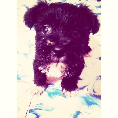 I Love My Dog *-*