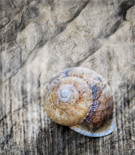 Animal Themes Close Up Snail Eyeem Snail Snail Shell Close Up Snail Shells Snail Closeup Snail Photography Snail Shell Snails Snailshell Snail Collection Gastropod Textured  Close-up Blend Blended Images Blended Blended Images, Blended Photo Textured  EyeEm Best Shots EyeEm Eyeem Blended Photos Photo Blending Photo Blend